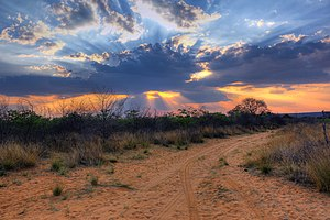 Crepuscular rays at Sunset near Waterberg Plateau.jpg