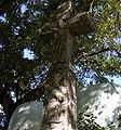 Croix st pierre.JPEG