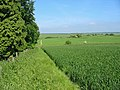 Crops Pentridge Dorset - geograph.org.uk - 183042.jpg