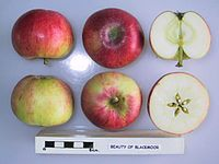 Cross section of Beauty of Blackmoor, National Fruit Collection (acc. 1981-092).jpg