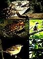 Cuba - Camagüey, Sierra de Cubitas (2006) (20776396876).jpg