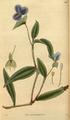 Curtis's Botanical Magazine, Plate 3047 (Volume 58, 1831).png