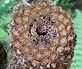 Cut Tree Fern (20041805158).jpg