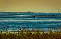 Cuxhaven, Sahlenburg, Wattwanderung (11110849474).jpg