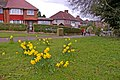 Daffodils beside Cycle Track, Enfield Road, Enfield, EN2 - geograph.org.uk - 732359.jpg