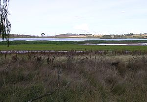 Northern Tablelands - Dangars Lagoon, Uralla, NSW