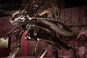 ギルモレオサウルス's relation image