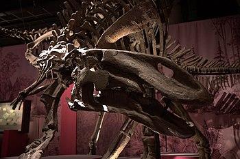 Dans l'ombre des dinosaures - Gilmareasaurus - 001.jpg