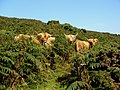 Dartmoor, Devon 2010 (4455632202).jpg