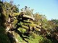 Dartmoor, Devon 2010 (4455632812).jpg