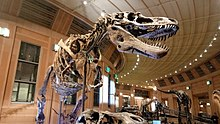 Daspletosaurus - Wikipedia