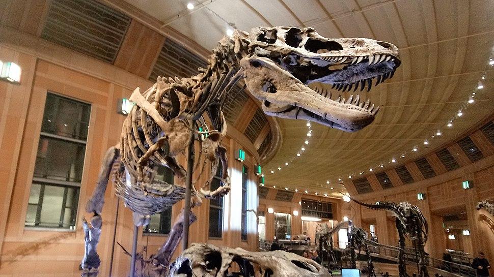 Daspletosaurus horneri skeleton