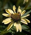 Denver Botanic Gardens (3855013740).jpg