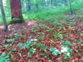 Der Wald.png