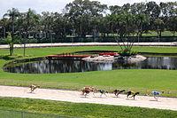 Derby Lane Greyhound Track Wikipedia