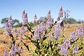 Desert colour (20125445149).jpg