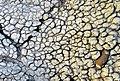 Dettaglio Calanchi con lapillo - Pisticci MT - a.jpg