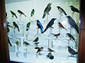Didactic birddisplay (10).JPG