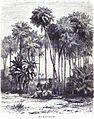 Die Gartenlaube (1857) b 552.jpg