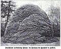 Die Gartenlaube (1898) b 0803.jpg