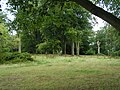 Dinedor Camp under the trees - geograph.org.uk - 1455562.jpg