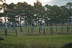 Dismounted patrol 131024-A-IA071-017.jpg