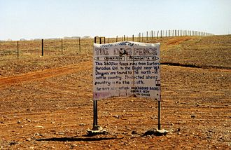 Dingo - A part of the dingo fence