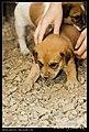 Dogs (5081438640).jpg