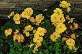 Dolomites - San Candido area - garden flowers (11059342596).jpg