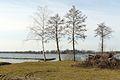 Dominickie Lake, Boszkowo.JPG