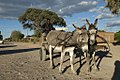 Donkey cart, Northern Cape (6252678729).jpg