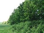 Dovhorakivskyi Botanical Reserve (2019.05.26) 18.jpg