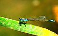 Dragonfly-siamak sabet.jpg