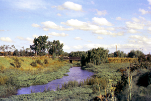 Duck River (New South Wales) - Duck River, looking towards the Mona Street bridge, South Granville in 1976.
