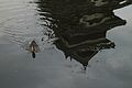 Duck and Matsumoto Castle reflected in moat (14894499080).jpg