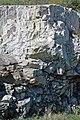 Dunham Dolomite (Lower Cambrian; Route 2 roadcut, southeast of the Lamoille River bridge, Vermont, USA) 4.jpg