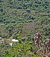 Estate Carolina Sugar Plantation