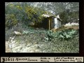 ETH-BIB-Ajaccio, Corsica, Hütte in Mimosen-Dia 247-11956.tif