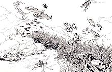 Drawing of seabed, showing plants and fish swimming above