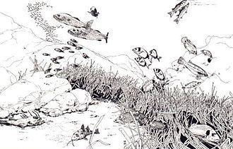 Posidonia oceanica - Image: Ecosistema posidonia