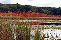 Edge of Great Meadow.jpg