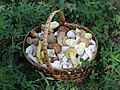 Edible fungi in basket 2012 G2.jpg