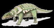 "Edmontonia was an ""armored dinosaur"" of the group Ankylosauria."