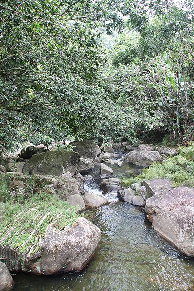 File:El Yunque nat park Rio Blanco PR IMG 2015.JPG