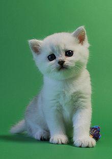 Adolescent avec une chatte serrГ©e