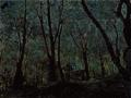 Elaborator chestnut wood.png