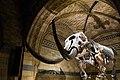 Elephant bones (28226678809).jpg