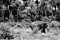 Elephant from the Nehru Zoological Park - Hyderabad, Telangana.jpg