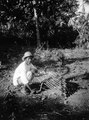 En man gillrar en duvfälla. Pearl Islands. Panama - SMVK - 004165.tif