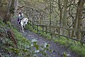 Equestrians on bridleway above Colden Clough - geograph.org.uk - 442494.jpg
